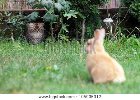Cat And Rabbit, Hunting
