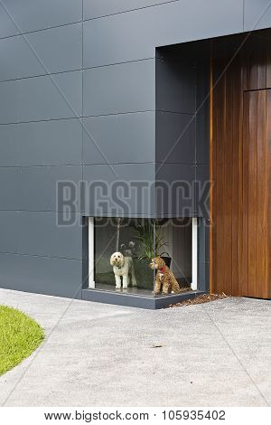 A colour photograph of a white dog and a brown dog waiting infront of a low window at a house with t