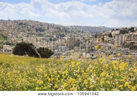 Panoramic View Of Amman From The Old Citadel