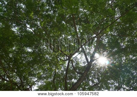 Sunlight Under Shade Of Tree Branch