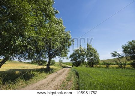 Ground Road In A Rural Landscape