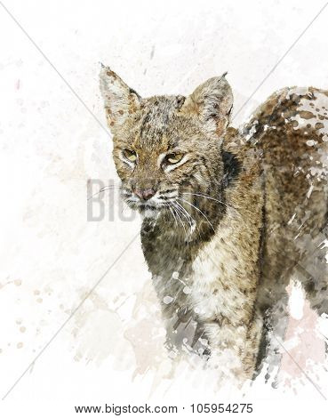 Digital Painting Of Bobcat ,close up