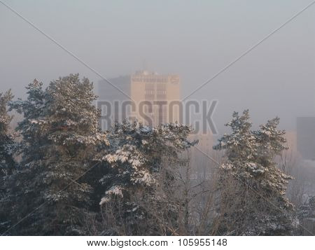 Vattenfall building across snowy tree tops