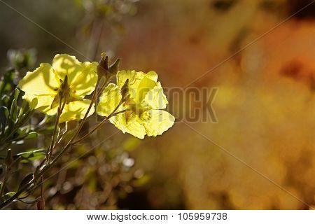 Wild Flower On Backlight