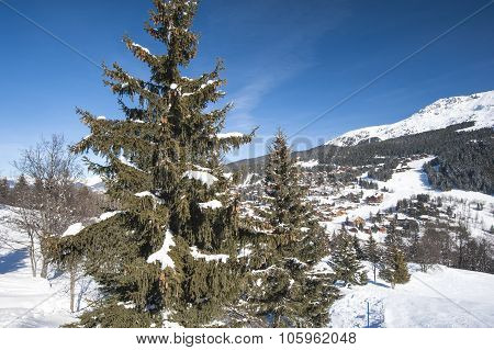 Panoramic View Over A Snowy Slope With Pine Tree
