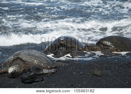 Turtles on black sand beach