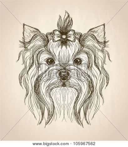 Hand drawn graphic portrait of yorkshire terrier, front view vector illustration.