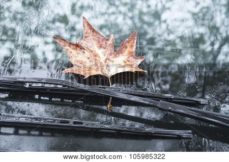 Sycamore Leaf On Wipers Of A Car In Autumn Day