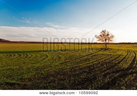 Small Tree On A Green Field