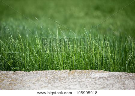 Rock And Grass Border