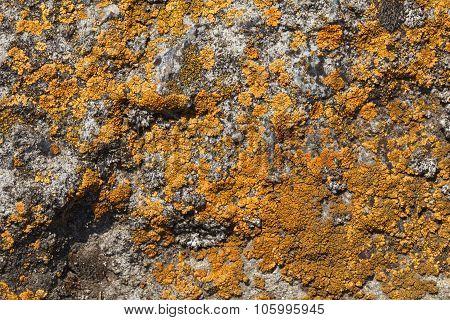 Lichen Pattern On Rock Background