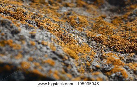 Lichen And Stone Macro Landscape