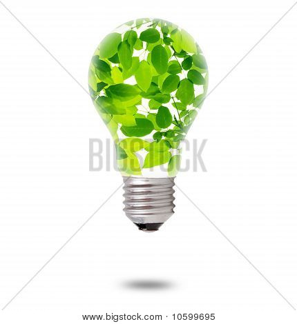 Green Leaves Inside Bulb