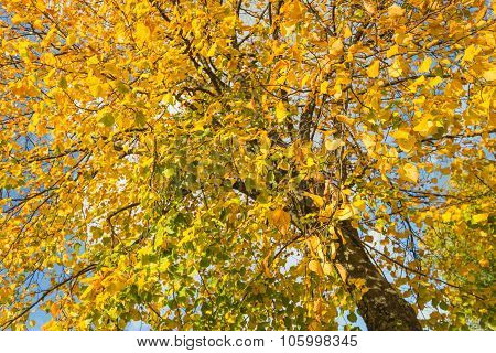 Diagonal Imaged Tree With Yellowed Leaves