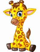 Постер, плакат: Adorable baby giraffe sitting isolated on white background