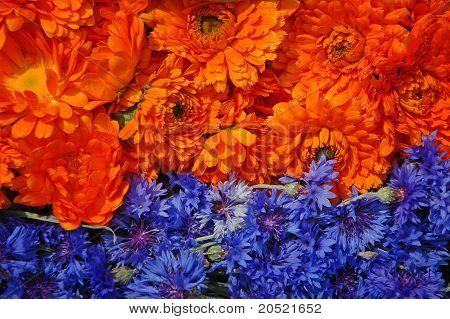 Marigold And Cornflower