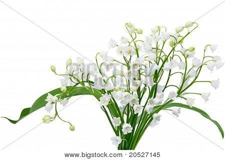 May Lily