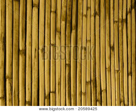 Dried Bamboo Tinted