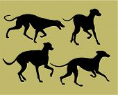 picture of greyhounds  - black silhouettes of four greyhounds running together - JPG