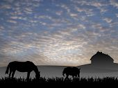 picture of workhorses  - two horses on pasture at sunset illustration - JPG