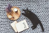 Black cat relaxing on knitted woolen chunky blanket. Book and wooden tray with home decor on the war poster