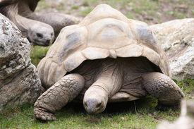 stock photo of the hare tortoise  - Tortoise slowly moves into it - JPG