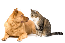 picture of cat dog  - Dog leaning and cat sitting isolated on white background - JPG