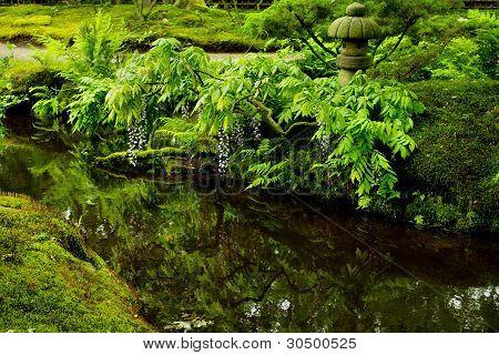 Water reflection in Japanese garden