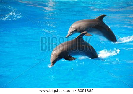 Two Dolphin Jumping