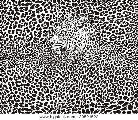 Leopard Background.eps