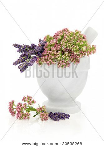 Valerian and lavender herb flowers in a marble mortar with pestle isolated over white background.