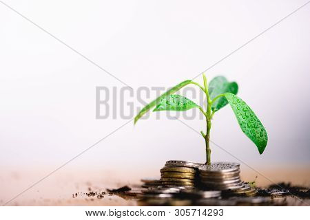 poster of Young Plant Grow And Coins Stack, Pension Fund, 401k, Passive Income, Investment And Retirement Conc