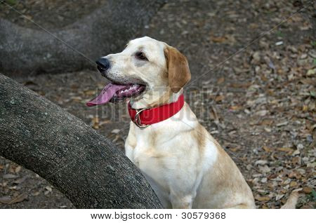 Scout with a New Red Collar