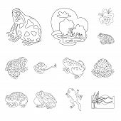 Isolated Object Of Amphibian And Animal Logo. Set Of Amphibian And Nature Vector Icon For Stock. poster