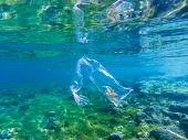 Plastic Bag With Seaweed Inside In Blue Sea Water, Underwater Photo. Tropical Sea With Plastic Trash poster