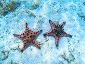 Two Orange Starfish On White Sand Beach Underwater Photo. Star Fish In Tropical Seashore. Exotic Isl poster