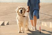 Guide Dog Helping Blind Person With Long Cane Going Up Stairs Outdoors poster