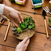 Woman Showing Master Class On Making Florarium In Glass Jar With Various Tools On Table. Home Garden poster