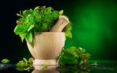 Herbs. Bunch of Fresh green organic aromatic herb leaves in wooden mortar with pestle over green bac poster