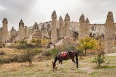 Horses with famous rock formations at background in Love valley, Cappadocia. Hourse riding in Cappad poster