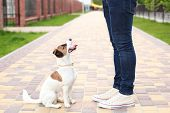 Dog And Owner Jack Russell Terrier In Anticipation Of A Walk In The Park, On The Street, Patient And poster