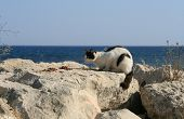Black And White Stray Cat Sittting On A White Rock Beside Dry Cat Food In Front Of The Blue Sea poster