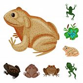 Vector Design Of Frog And Anuran Symbol. Collection Of Frog And Animal Stock Vector Illustration. poster