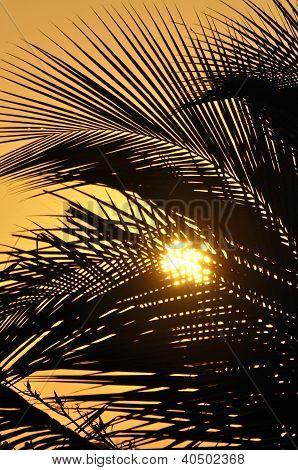 Pôr do sol laranja através de Palmas