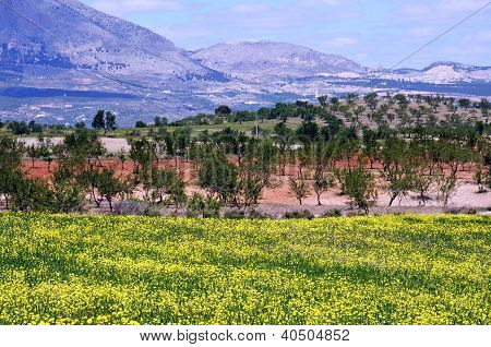 Andalusian countryside in Springtime, Spain.
