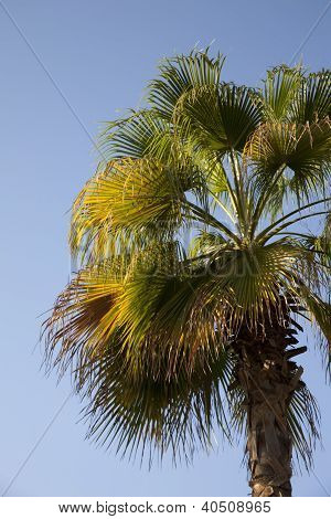 An Image Of Nice Palm Trees In The Blue Sunny Sky
