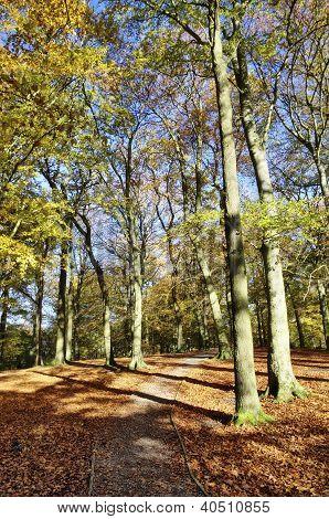 Autumn trees at Talkin Tarn Country Park