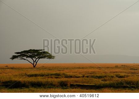 Lone Acacia Tree Against Expansive Misty Sky