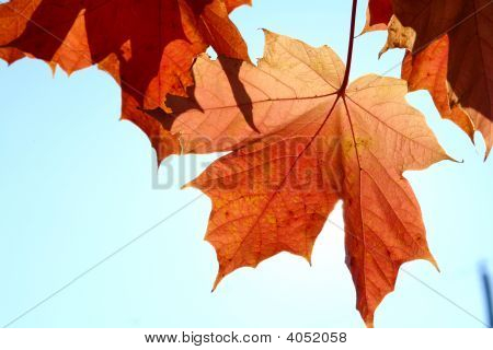 Fall Leaf And Blue Sky