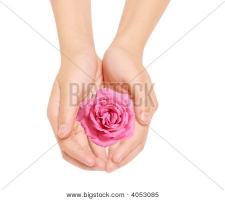 Rose And Hands